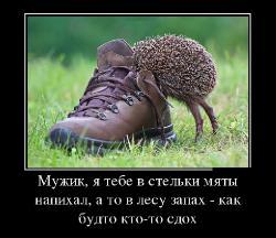 Подборка лучших демотиваторов №264